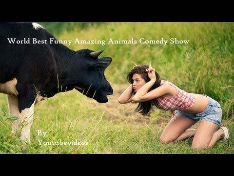 World Best Funny Amazing Animals Show Comedy Videos Best