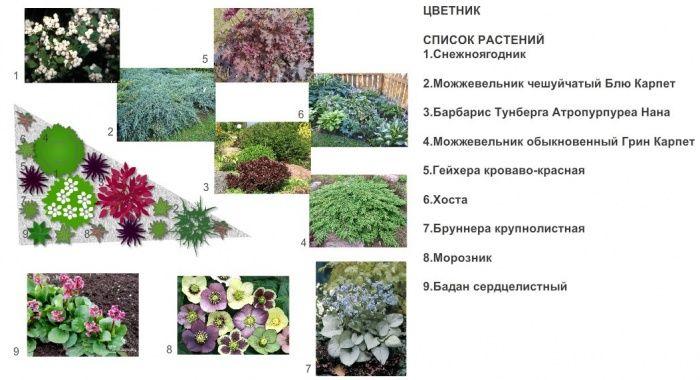 миксбордер схема фото подбор растений