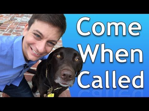 How To Train Your Dog To Come When Called Youtube Dog Training