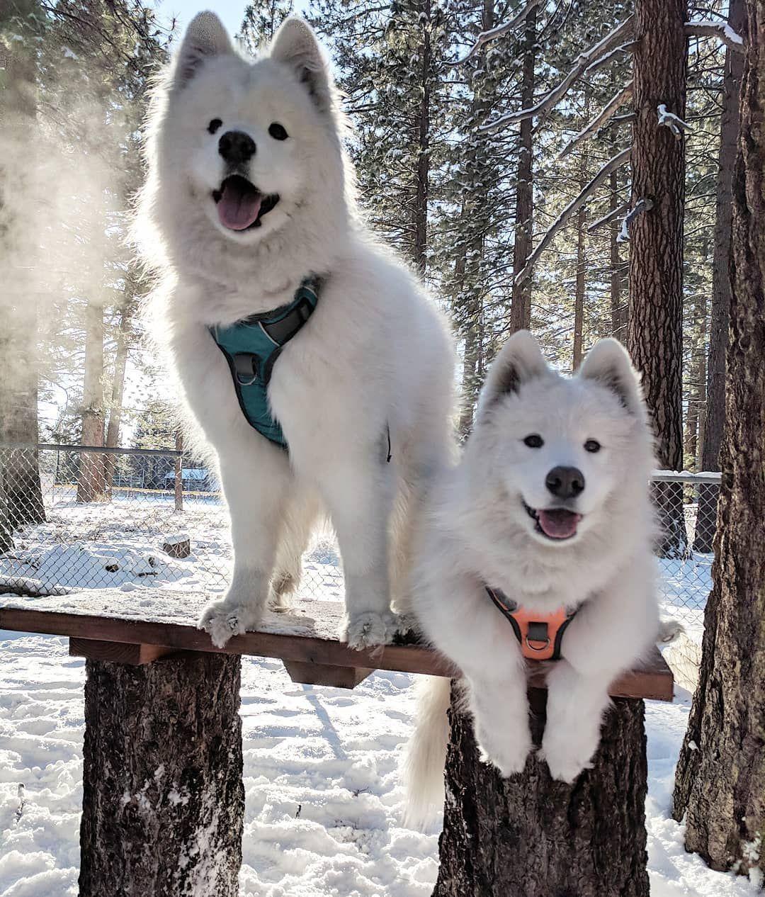 Adventure Dog Harness Dog Harness Dog Training Dogs