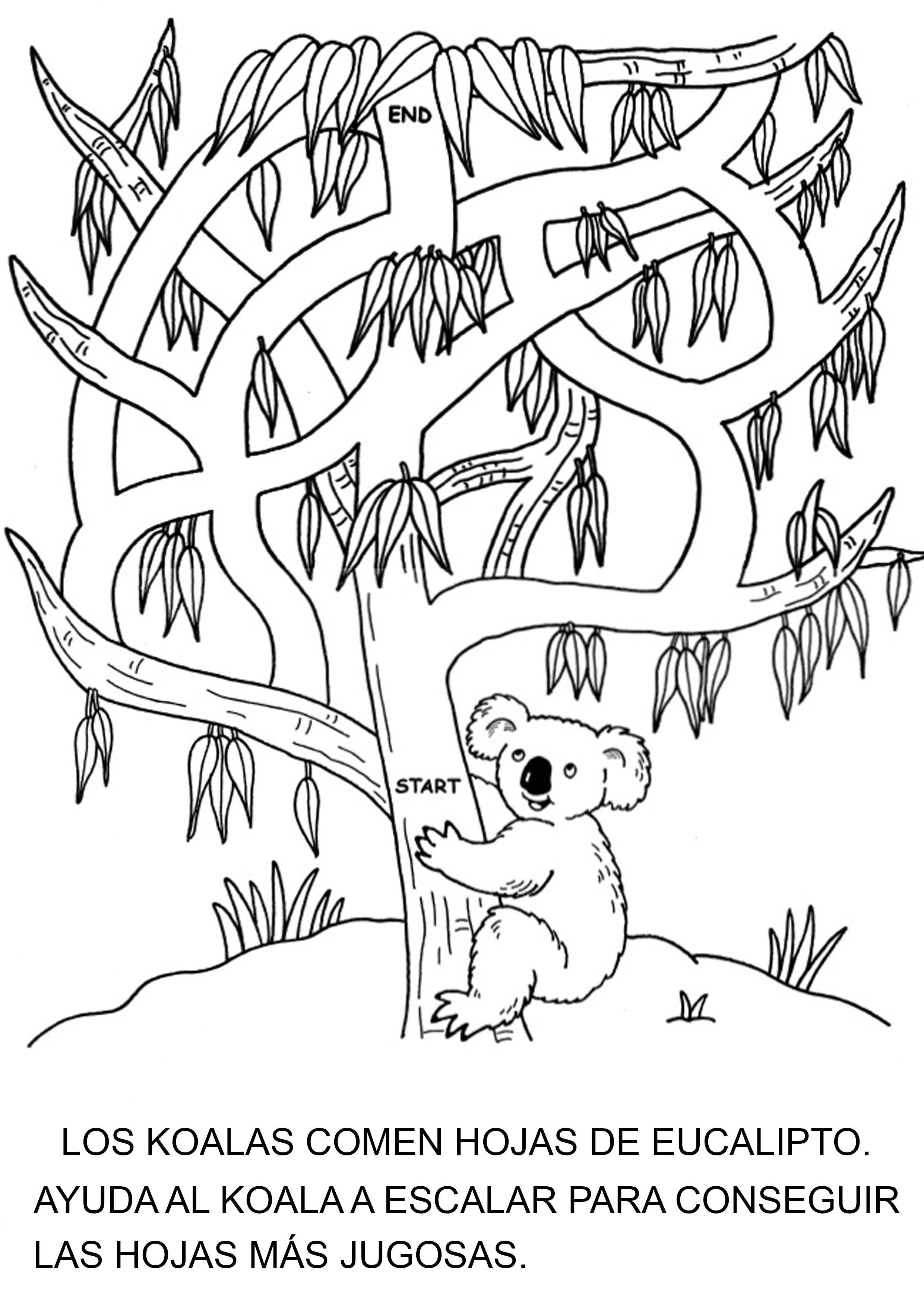 Laberinto Koala