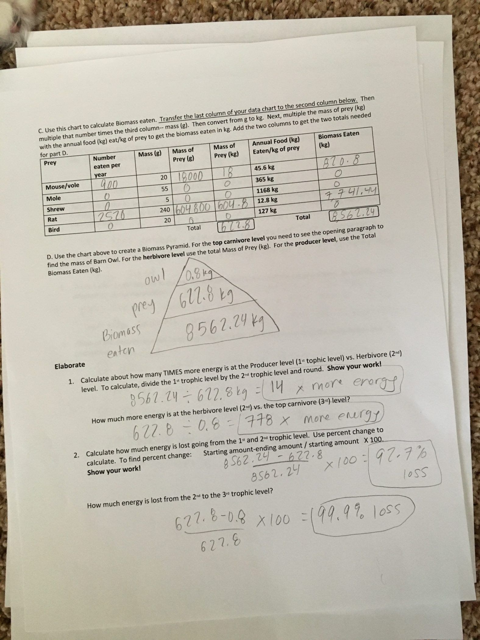 Ecological Pyramids Worksheet Answer Key Owl Pellet