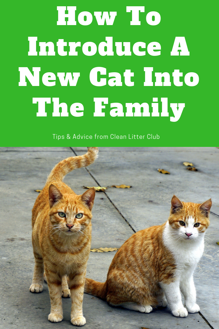 How To Introduce A New Cat To Your Family Introducing A New Cat Cats Cat Training