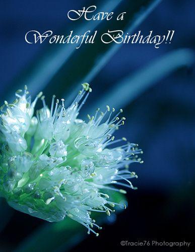 123 Ecards Birthday : ecards, birthday, Birthday, Roses, Wishes, Friend,, Wishes,
