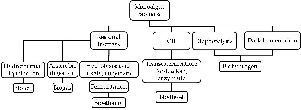 microalgae bioethanol production process - Google 搜索