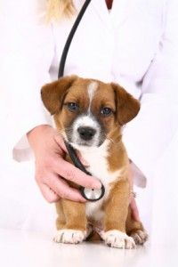 Pet Insurance In Ireland Is Pet Insurance Important For Your Pets Clinica Veterinaria Animais Caes