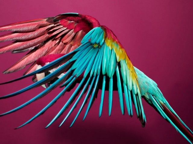 Wonderful Colorful Perroquet Photography Series by Sølve Sundsbø