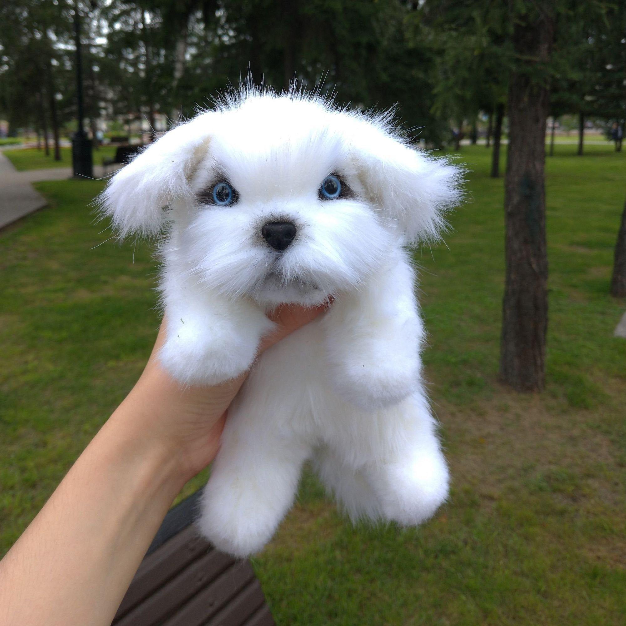 Stuffed lapdog maltese.Realistic stuffed animal.Realistic