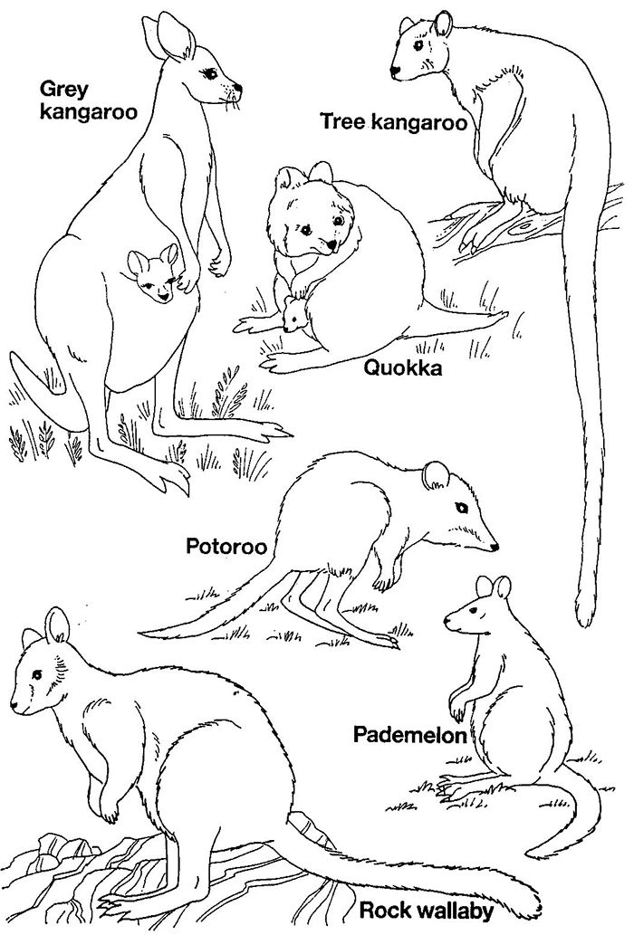 50+ Australian Animal Template Shapes, Crafts & Colouring