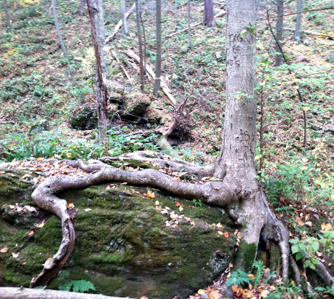 Roots Reaching