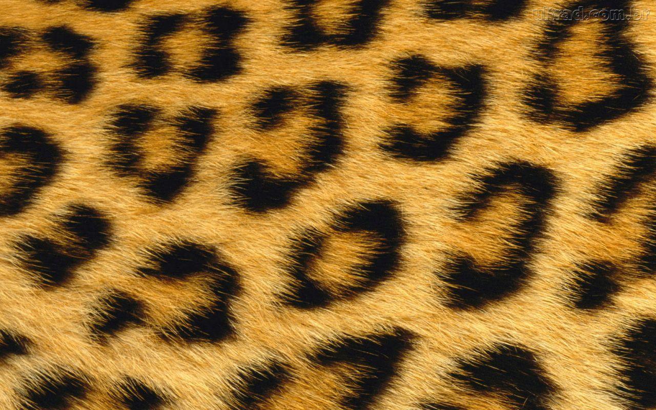 Leopard Print Natural HD Wallpaper Animal Print for Desktop Wallpapers High Resolution