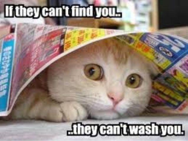 Future Time Clauses Memes De Gatos Divertidos Gatitos Divertidos Imagenes Divertidas De Animales