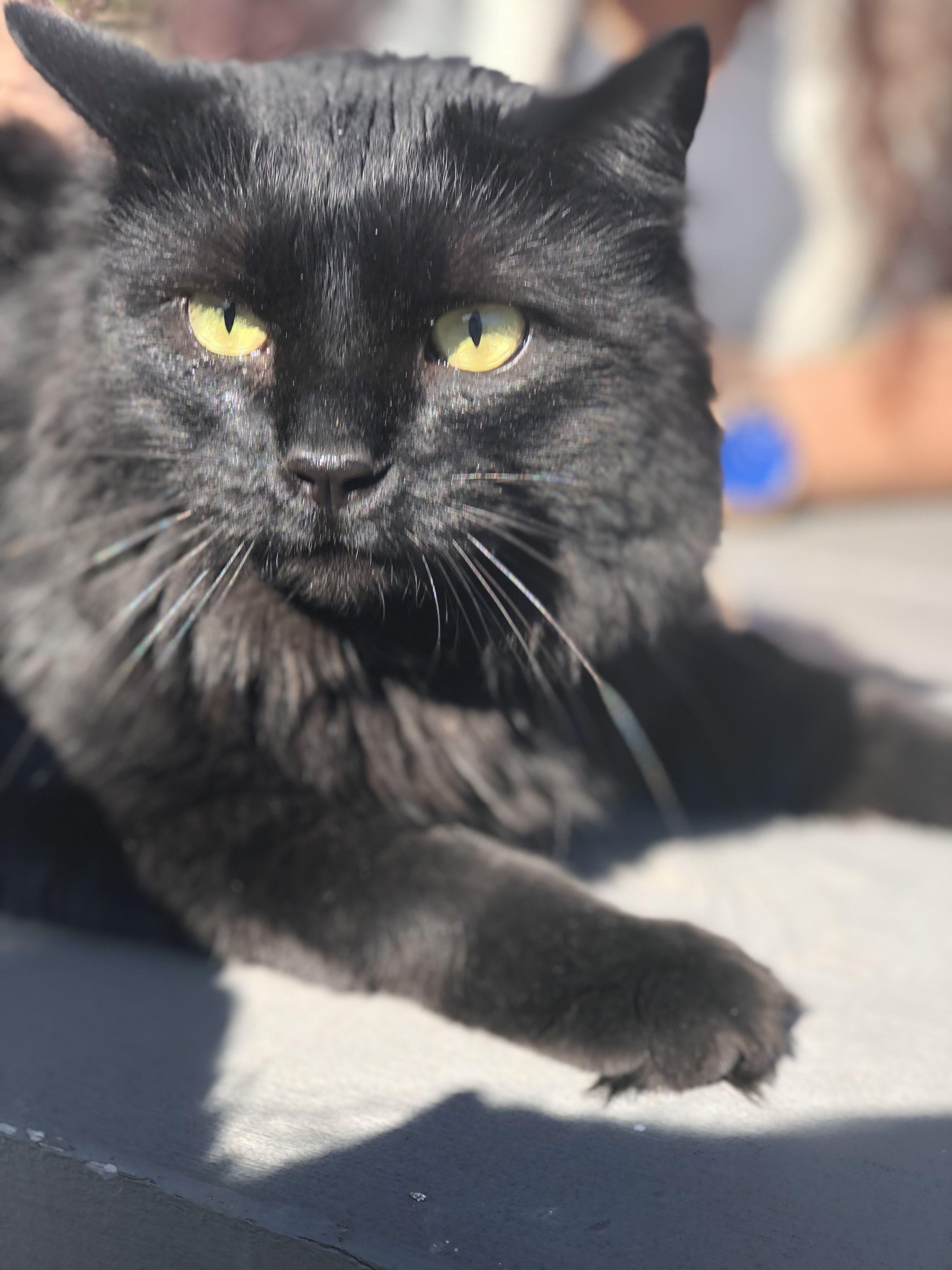 Joker Black Cat Lovers Black Cat Lover Cat Lovers Cats