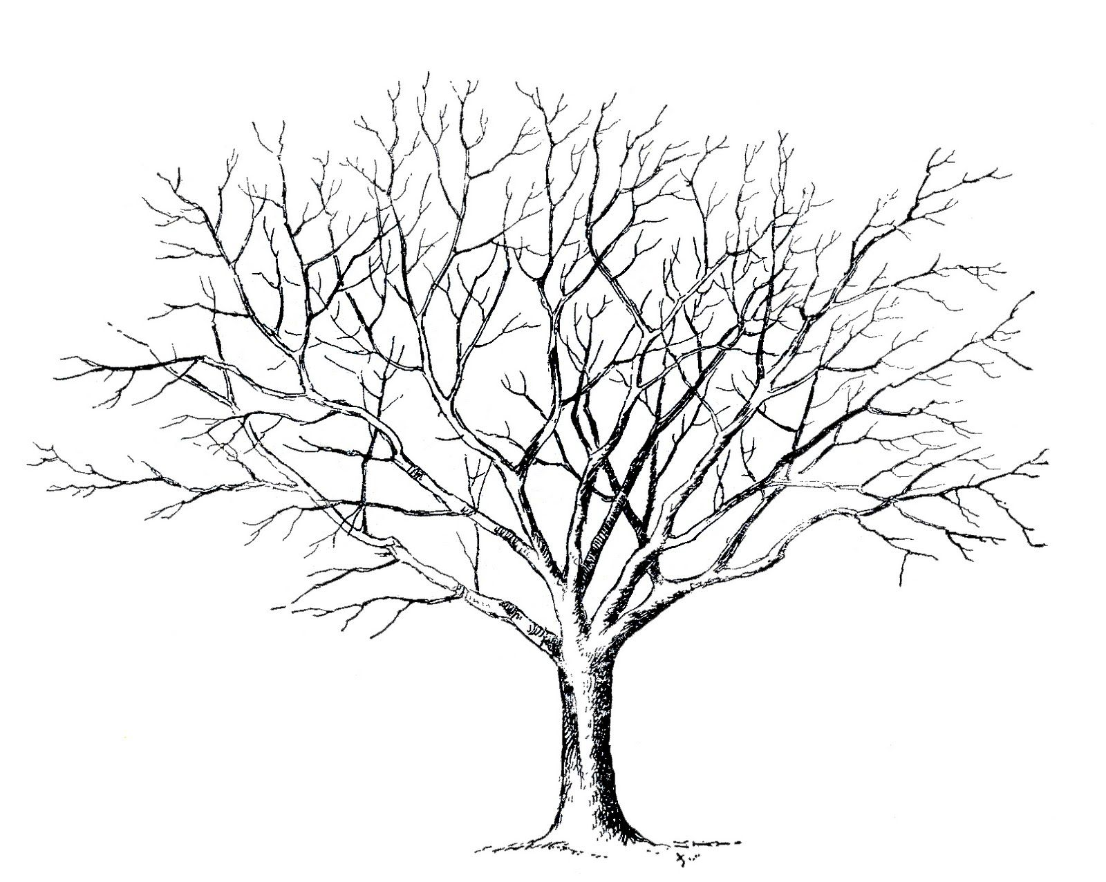 Malvorlage Baum Malvorlage Baum Ohne Blätter Art Projects In 2019 Drawings