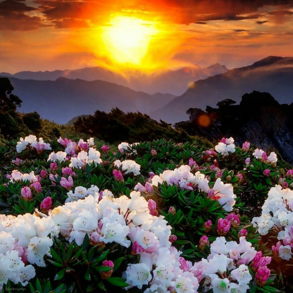 Rekey On Twitter Beautiful Landscapes Flowers Nature Flower Aesthetic