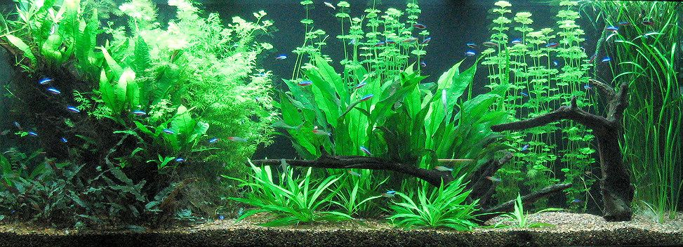 150 Gallon Planted Aquarium Planted Aquarium Aquarium Design Plants