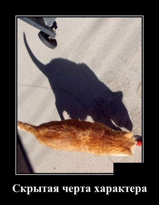 Демотиваторы. | Смешные мемы о кошках, Смешные фотографии ...