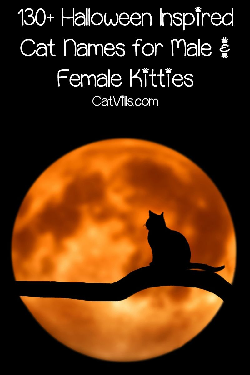 130 Halloween Inspired Cat Names For Male Female Kitties Cat Names Girl Cat Names Halloween Names For Cats