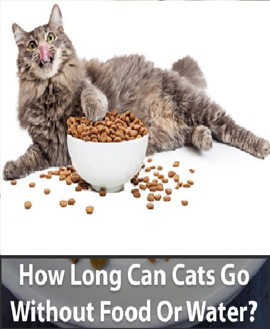How Long Can A Cat Go Without Food Or Water Feline Eating And Drinking Needs Dancing Cat Cat Parenting Cat Drinking