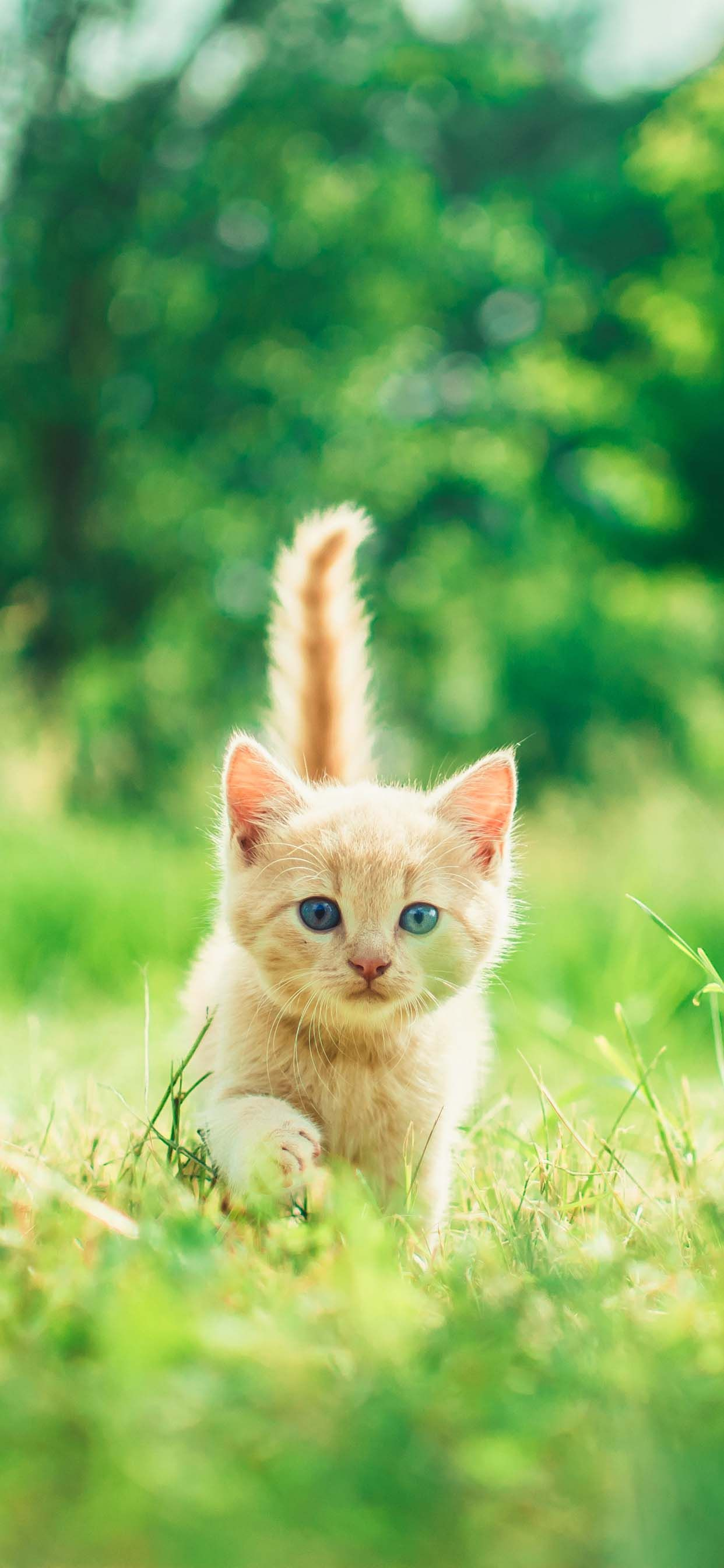 10 Cat Wallpapers For Iphone Xs Max Iphone Xs Iphone Xr I Like Cats Very Much Kittens Cutest Cute Cat Wallpaper Baby Cats