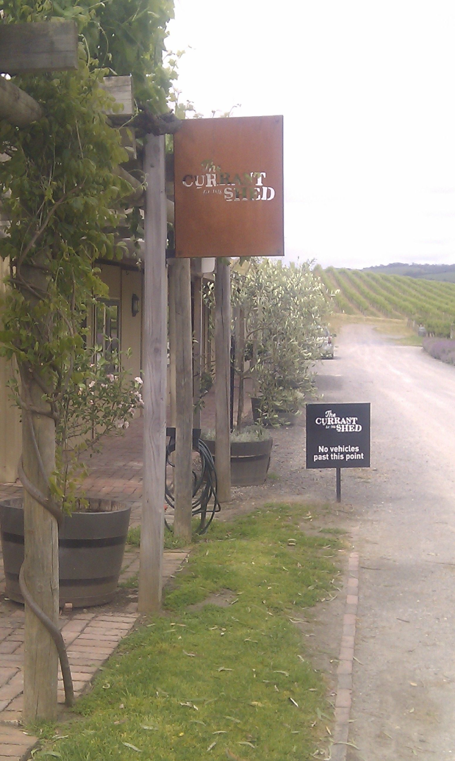 the currant shed restaurant in the vineyards in mclaren vale