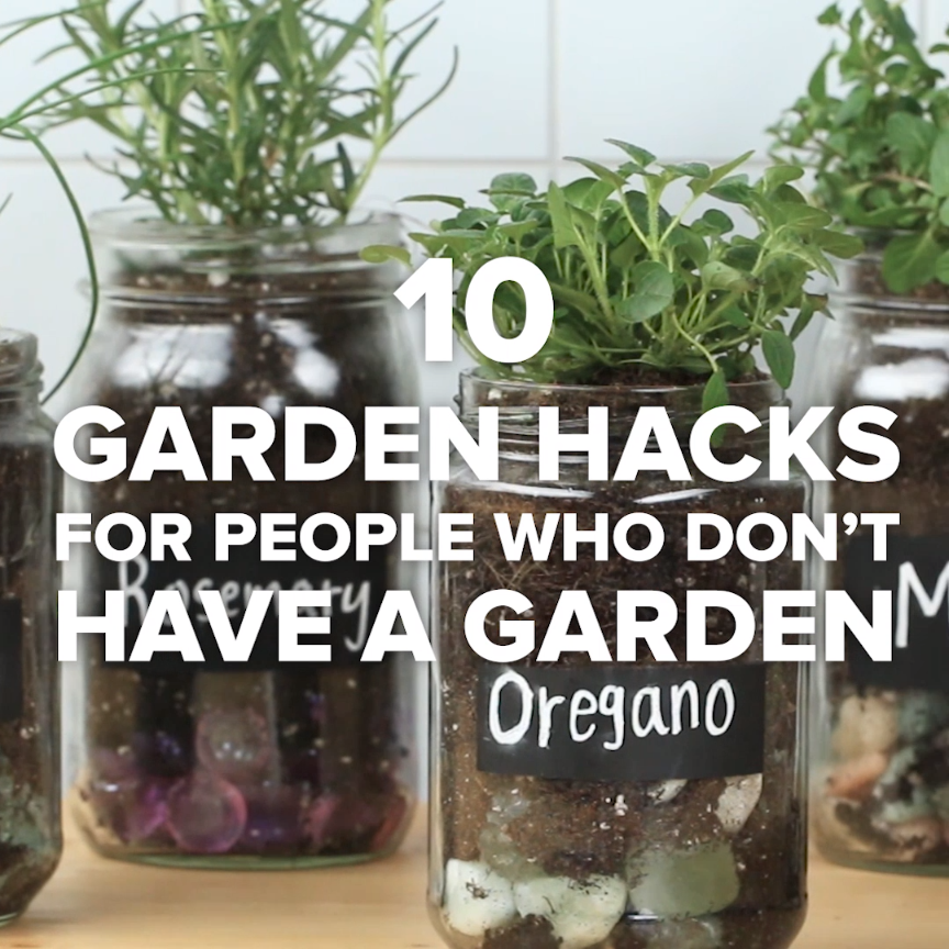 10 Garden Hacks For People Who Don't Have A Garden #gardening #plants #green #small #apartmentgardening