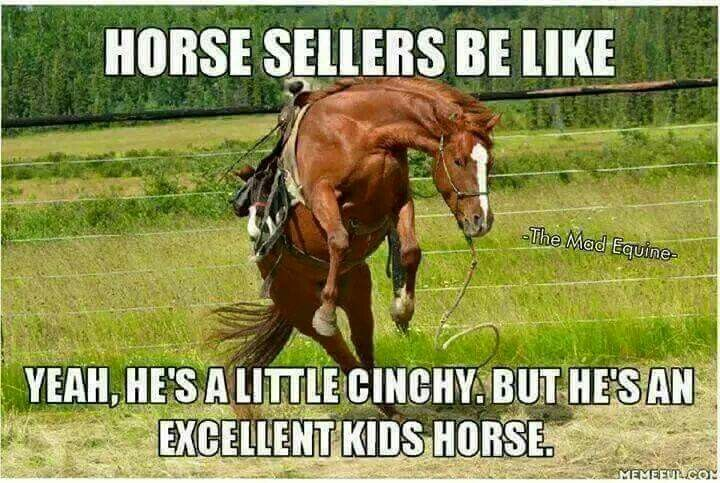 Pin By Gooob On Funny Horse Quotes Horse Jokes Funny Horse Pictures Horse Quotes Funny
