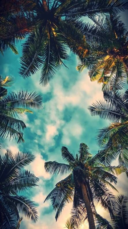 Free Ringtones And Wallpapers Zedge Hd Nature Wallpapers Nature Wallpaper Palm Wallpaper