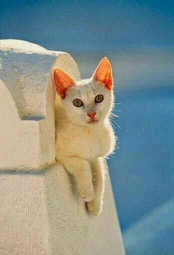 Photo chat en Grèce