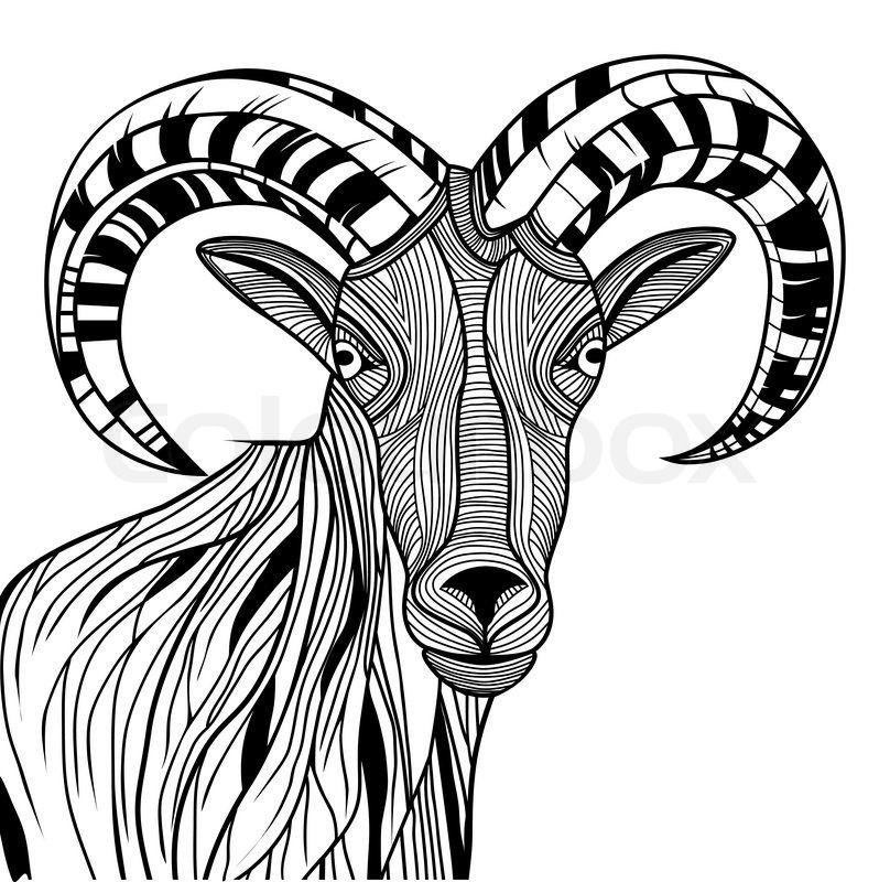 Vector Line Art Animals : Stock vector of ram head or mountain goat line art sheep