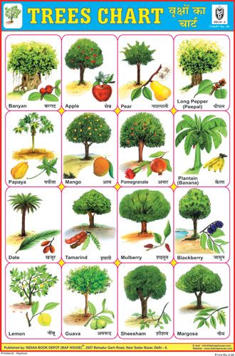Trees Chart Vegetable Chart Trees For Kids Trees Name In English