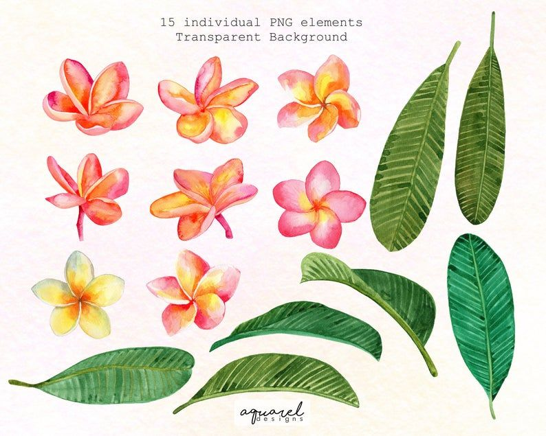 Plumeria Hand Painted Watercolor Orange And Pink Frangipani Etsy In 2020 Watercolor Flowers Tutorial Tropical Flowers Cherry Blossom Watercolor