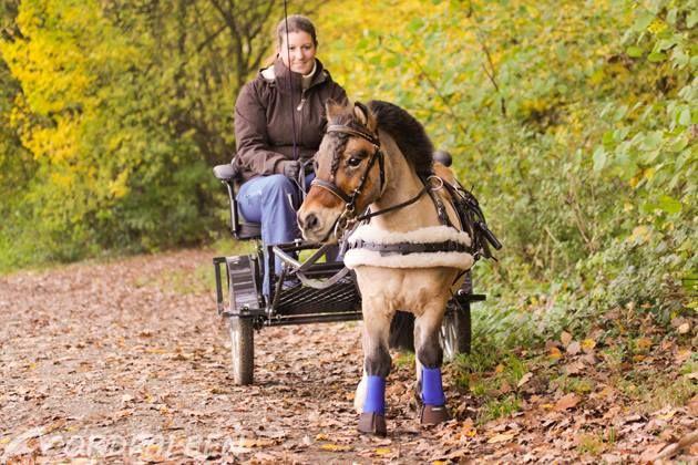 Pferdesachen Selber Machen Verschönert Und Verändert