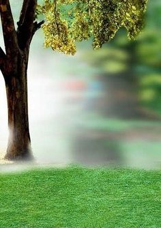 Studio Background Hd 1080p For Photoshop Photoshop Backgrounds Tree Photoshop Photoshop Backgrounds Free