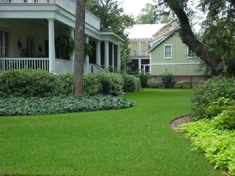 Palmetto St Augustine A Superior St Augustine Grass Palmetto St Augustine Is A Low Maintenance Front Lawn Landscaping Lawn And Landscape Florida Landscaping