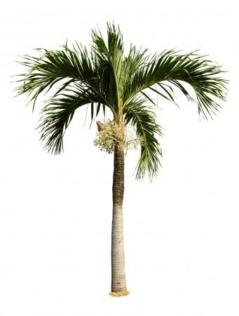 heres a list of all the best adapted and easiest to grow indoor palm trees for your home office hotel or lobby - Christmas Palm Trees For Sale