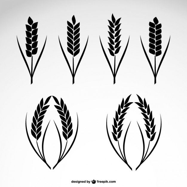 Wheat Collection Icons Wheat Drawing Wheat Vector Wheat Tattoo