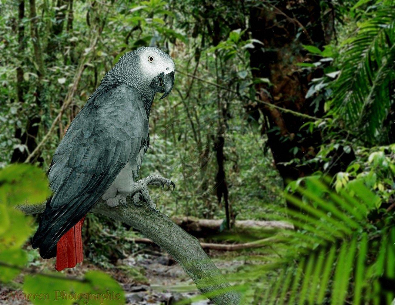 african tropical rainforest animals wwwpixsharkcom