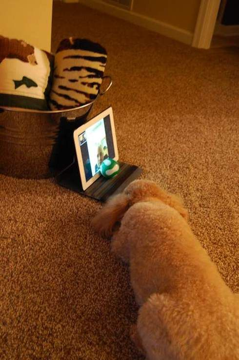 Dog and dad's touching online exchange (PHOTOS) | Cute ...