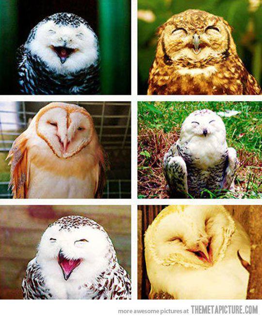 Owls always love you…