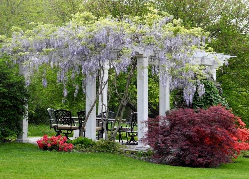blauregen über die terrasse - stilvolle pergola | garten, Gartengerate ideen
