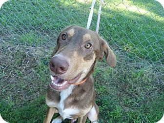 Pin by Jo Wiest on Rescue Dogs | Pet adoption, Dog mixes