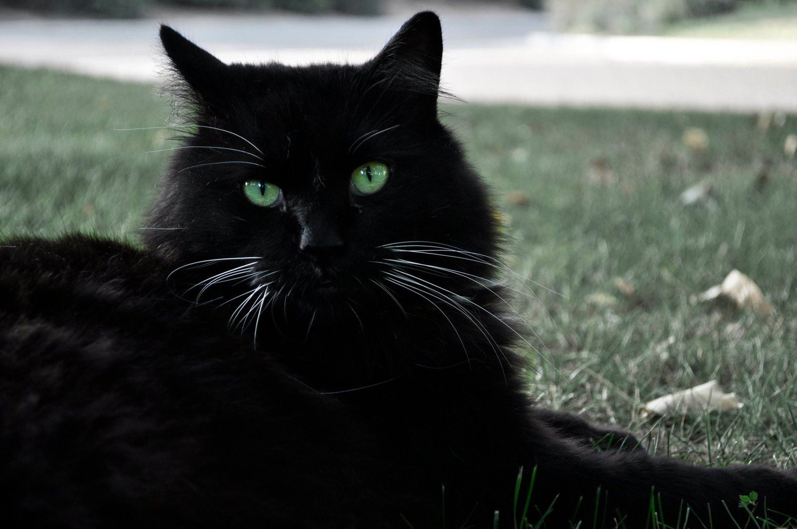 Green Eyes For Black Cats Cat With Blue Eyes Cats Black Cat Aesthetic