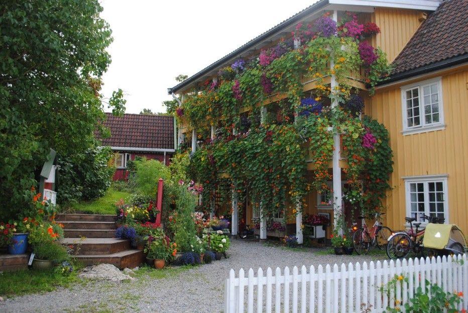 Hengende hage fra Drøbak, i nærheten av Frogn