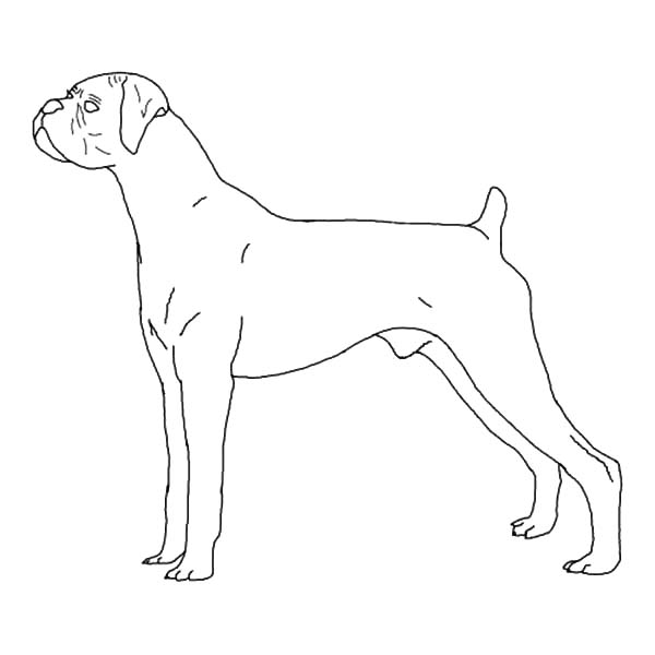 B Is Fro Boxer Dog Coloring Pages Best Place To Color Dog Coloring Page Boxer Dogs Coloring Pages