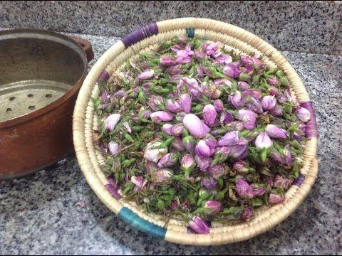 تقطير ماء الورد في المنزل و الاحتفاض به مدة اطول للإستفادة من فوائده التجميلة العديدة للبشرة والجسم Succulents Plants Diy