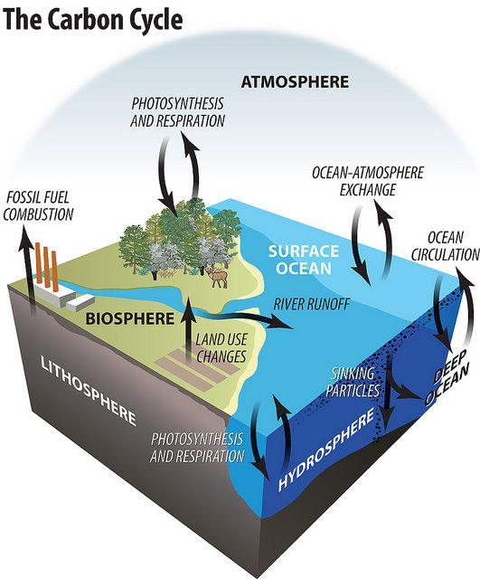 infographics portfolio | Carbon cycle, Environmental