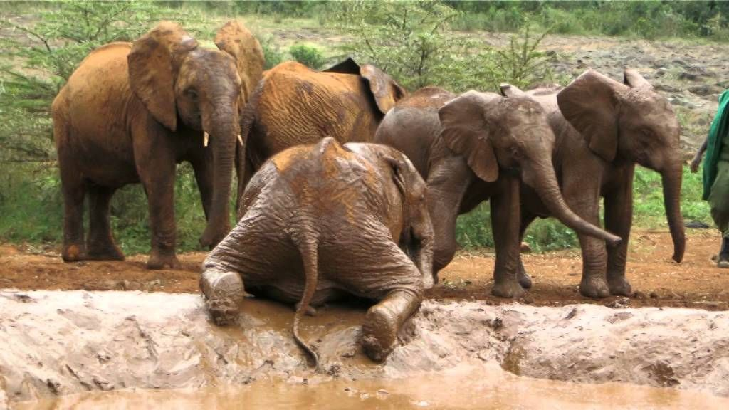 David Sheldrick Wildlife Trust - Nairobi, Kenya - YouTube