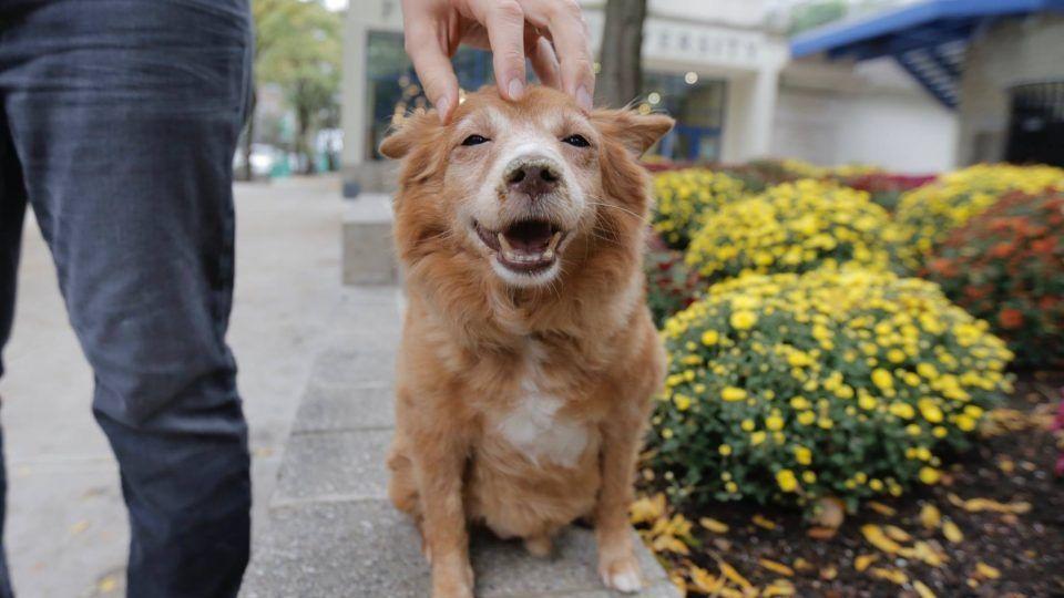 How to potty train an older dog dog potty dog training