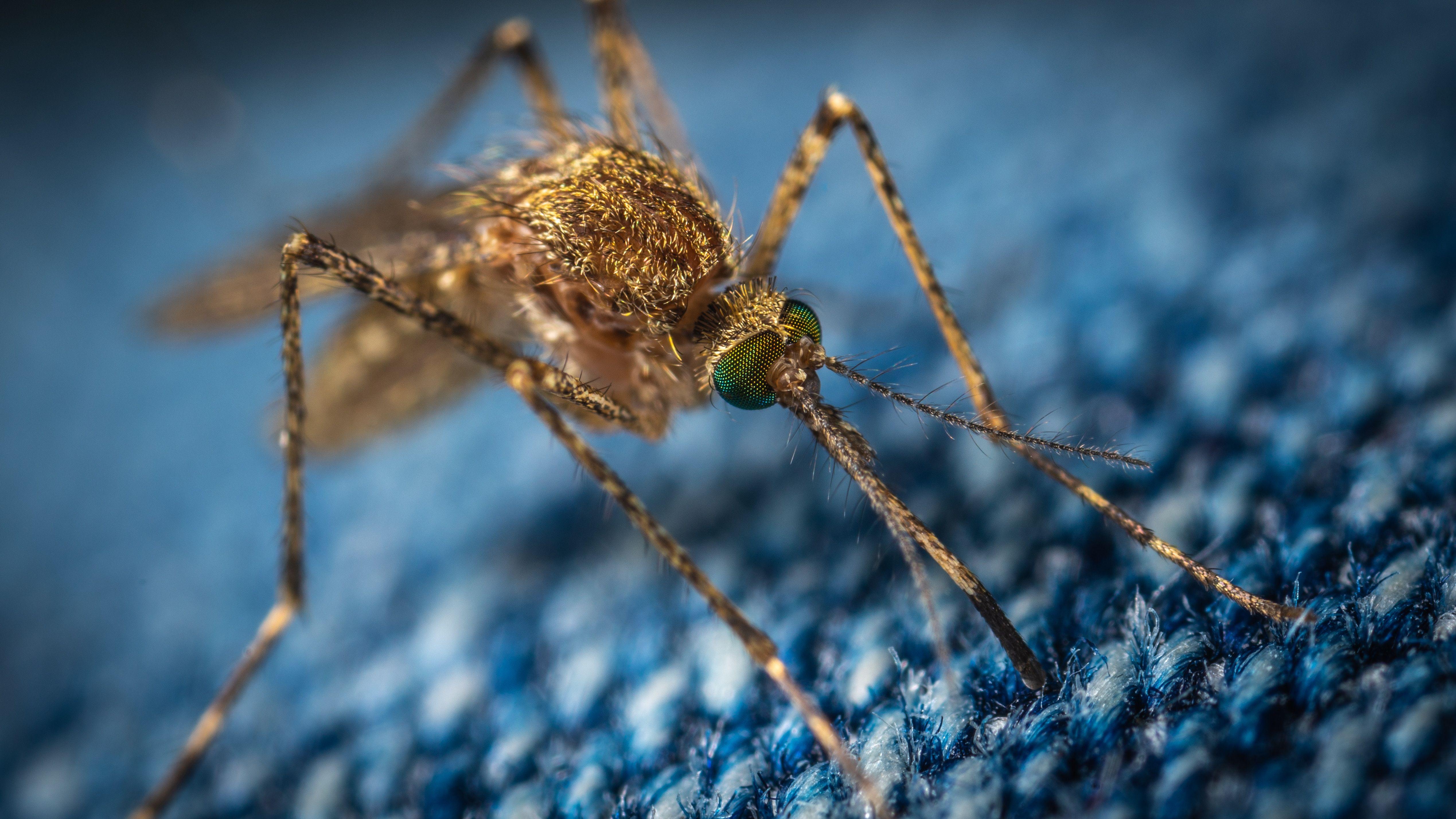 bli av med mygg